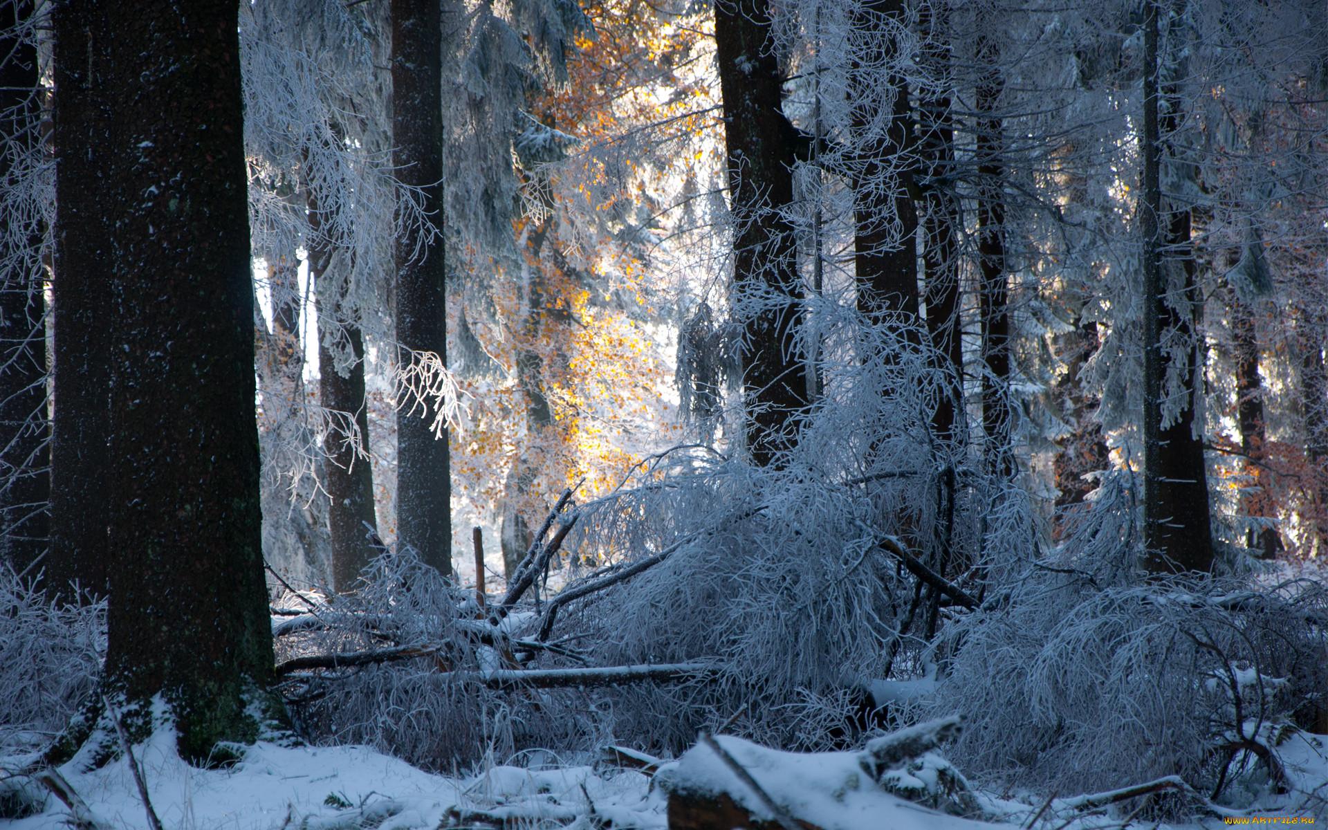 фалиро тоже таинственная зима картинки фотонов энергетическая